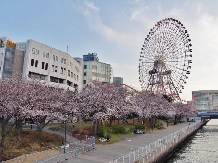 新港パークの桜