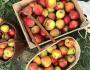 Teaser-Apfelrezepte