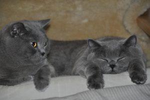 Carlo und Henry