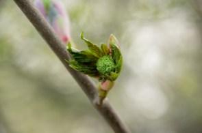 Frühling in Hetlingen