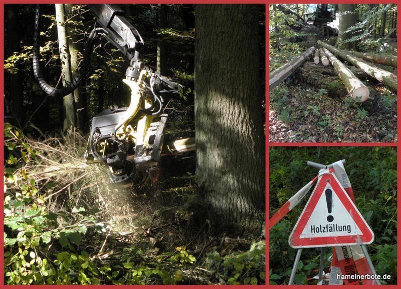 CDU wollte im Hamelner Stadtwald offenbar vermehrt / zusätzlich Bäume fällen lassen.