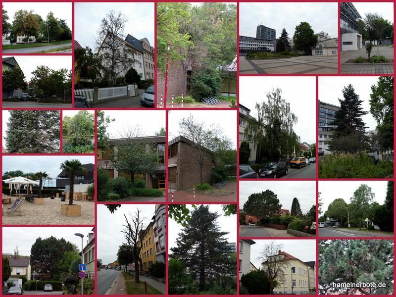Baumsterben 2.0 im Stadtgebiet Hameln