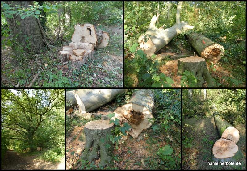 Baumfällungen Stadtforst Bereich Apenberg