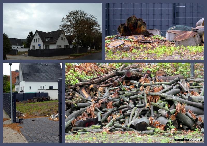 Baumfällung und Grundstücksgestaltung in Hameln