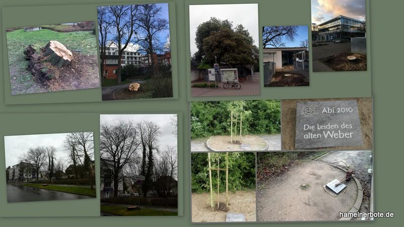 Baumfällungen Stadtgebiet – Einzelbäume