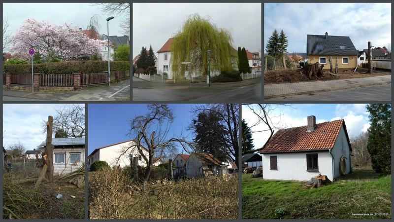 Stadtbildveränderungen – Baumverluste – Baumschönheit