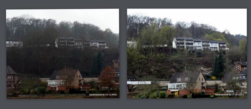 Baumfällung oberhalb Pyrmonter Straße