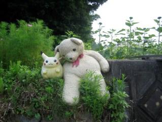 置き去りにされたピカチュウとクマ