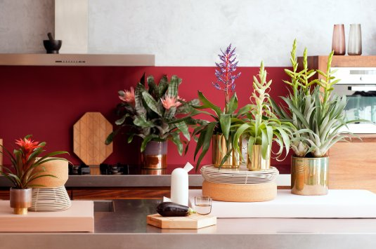 Bromeliad: houseplants of the month for March