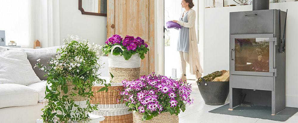 Winter bloomers: Houseplants of the Month for February