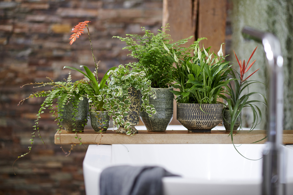 Bathroom plants: Houseplant of the Month for May