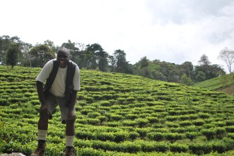 Look at those socks and waistcoat combo - Katete in front of a tea plantation