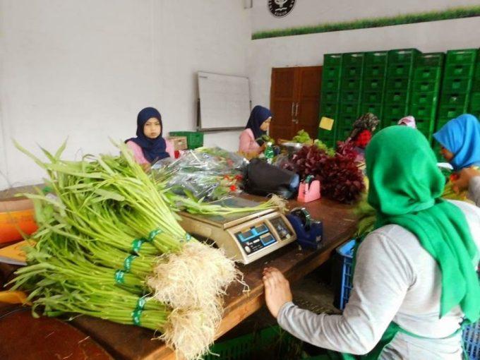 pemasaran pertanian organik