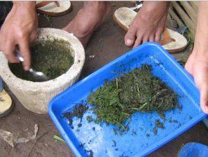 pembuatan pestisida organik, pertanian organik