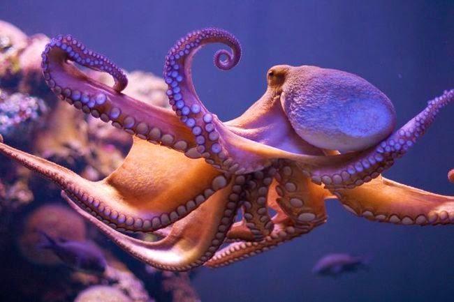 Ipa Dasar Smp Klasifikasi Makhluk Hidup Lengkap Beserta Penjelasan