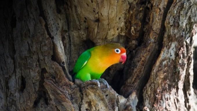 Hasil gambar untuk danger food lovebird