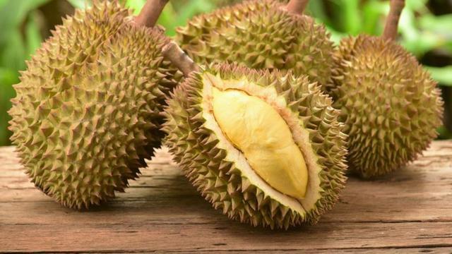 cara menanam durian bawor dan musang king