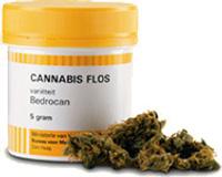 Fleurs de Cannabis vendu dans les pharmacies hollandaises