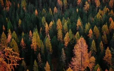 Kuituhampun kasvatus metsänsuojelukeinona