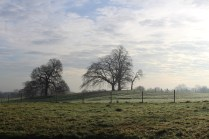 mbp-meadow-restoration-14-dec-2016-2