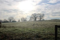 mbp-meadow-restoration-14-dec-2016-6