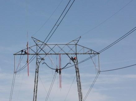 Der Strom Deutschlands soll von Hamstern produziert werden. Eine verantwortungsvolle Aufgabe.