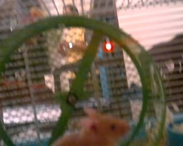 Funny hamster - 1506534705 funny hamster