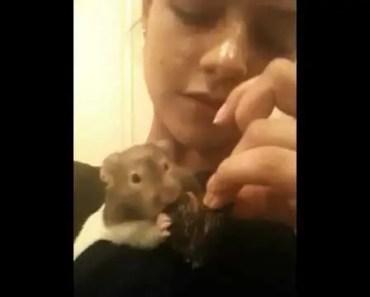 Funny hamster - 1506622078 funny hamster
