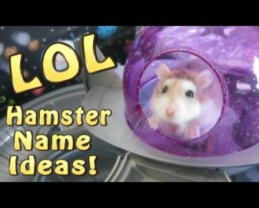 50 FUNNY AND CUTE HAMSTER NAME IDEAS!! - 50 funny and cute hamster name ideas