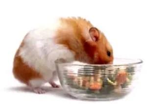 Eating_Hamster