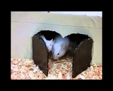 cute animals videos The hamster which appears from the hole funny animal - cute animals videos the hamster which appears from the hole funny animal