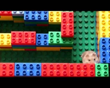 Cute funny hamster Emiel - cute funny hamster emiel