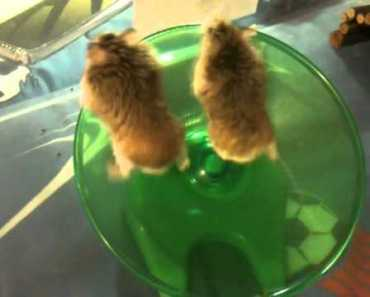 FUNNIEST HAMSTER VIDEO EVER! YOU WILL SMILE! - funniest hamster video ever you will smile