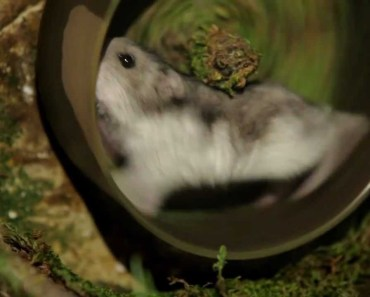 Funny Commercial - Talking Hamster Is Out Of Shape - funny commercial talking hamster is out of shape