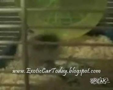Funny Hamster Fight - funny hamster fight