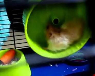 Funny Hamster High Speed Wheel - funny hamster high speed wheel