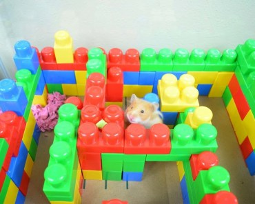 FUNNY Hamster In Lego Maze! - Cupcake HamHam Show! - hamster cage - funny hamster in lego maze cupcake hamham show hamster cage