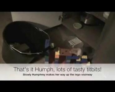 Funny Hamster Trap - funny hamster trap