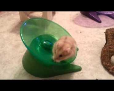 Funny Hamsters falling off the flying saucer wheel - funny hamsters falling off the flying saucer wheel