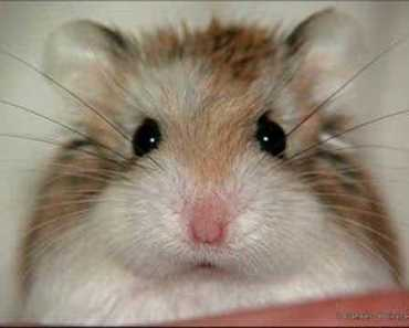 Funny hamsters - funny hamster video ! Part 2 - funny hamsters funny hamster video part 2