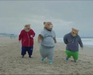 Funny Hamsters Kia Advertisement - funny hamsters kia advertisement