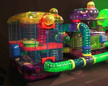 Gerbil Cage, Kaytee CritterTrail Village for Gerbils, Mice or Hamsters includes Burrowing Maze - gerbil cage kaytee crittertrail village for gerbils mice or hamsters includes burrowing maze