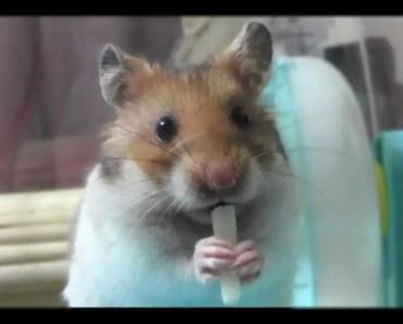 Hamster cute funny - hamster cute funny
