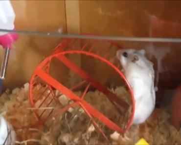 Hamster escape - hamster escape