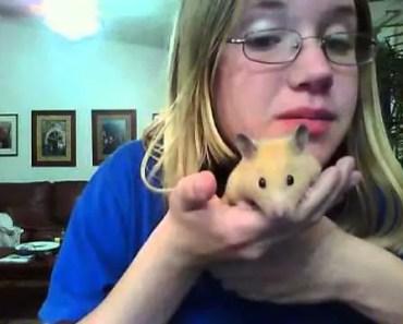 hamster for sale funny - hamster for sale funny