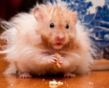 hamster funny - hamter funny wheel - funny hamster wheel fails - hamster funny hamter funny wheel funny hamster wheel fails