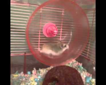 HAMSTER GOES FLYING funny-Best Vine Videos - hamster goes flying funny best vine videos