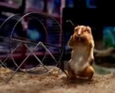 hamster, mice, rabbit very funny video - hamster mice rabbit very funny video