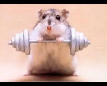 hamsters on wheel !!! Funny workout !! hamsterlar çemberde koşuyor !!! - hamsters on wheel funny workout hamsterlar cemberde kosuyor