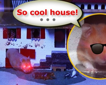 Java the funny pirate Hamster explores a new incredible House Palace (a farm)! - java the funny pirate hamster explores a new incredible house palace a farm